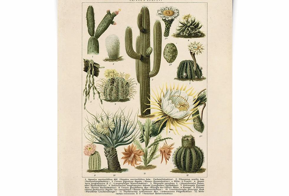 CACTI botanical print/