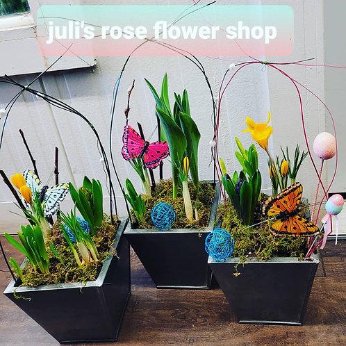 SB 5 Spring Bulbs (Set of 2)