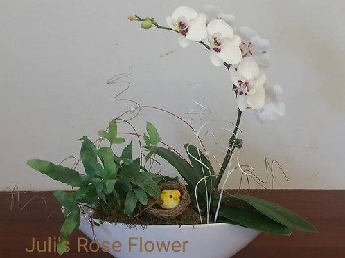SA 21 (Mini orchid)