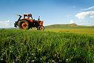 מאגר תבניות וויקס לאתרי חקלאות