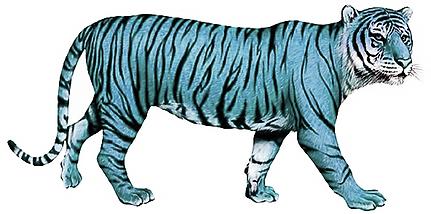 le petit tigre a rayures