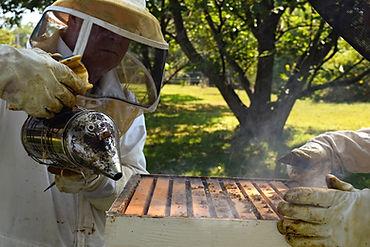 Pictures of Beekeeping