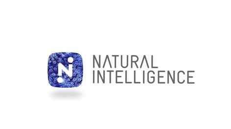 Purim NI Logo Reveal