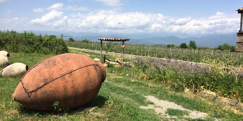 Degustace kvevri vín z Gruzie se Salome