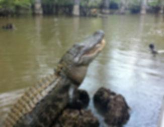 swamp tours.jpg