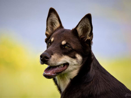 Koirahoitolamme on täyttänyt puoli vuotta!