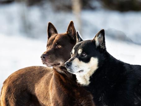 Koirahoitola Lumetan yrittäjän mielestä kiusaamiseen tulee aina puuttua.