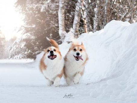 Kevättä rinnassa koirahoitolassa