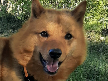 Koirahoitolan valinta - koiranomistajan tärkeimpiä päätöksiä