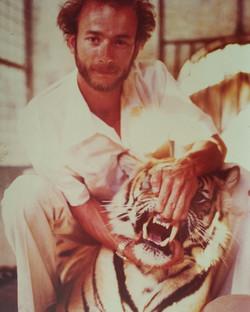Tiger in Abu Dabi