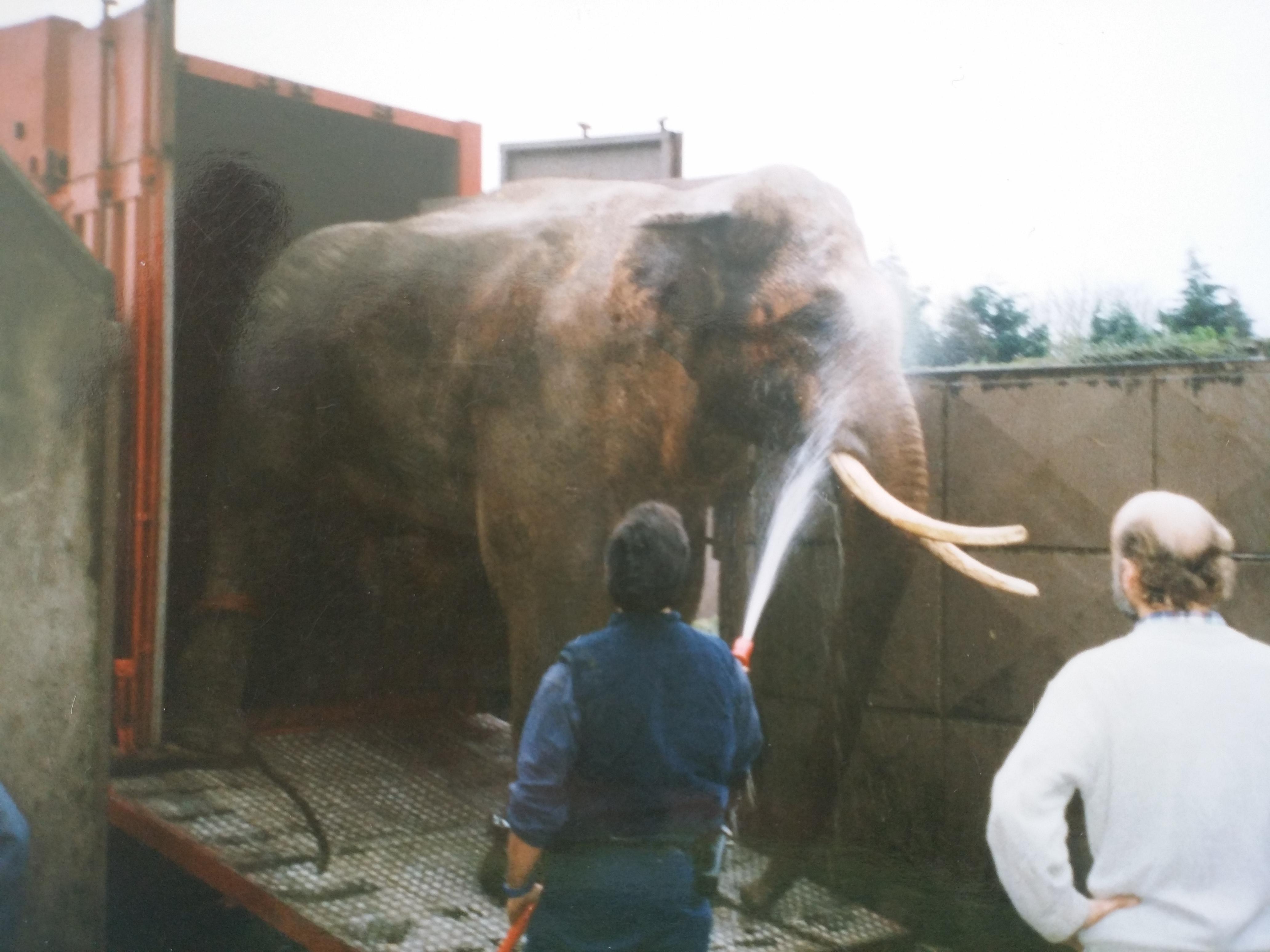 The Henley Vet - Zoo elephant