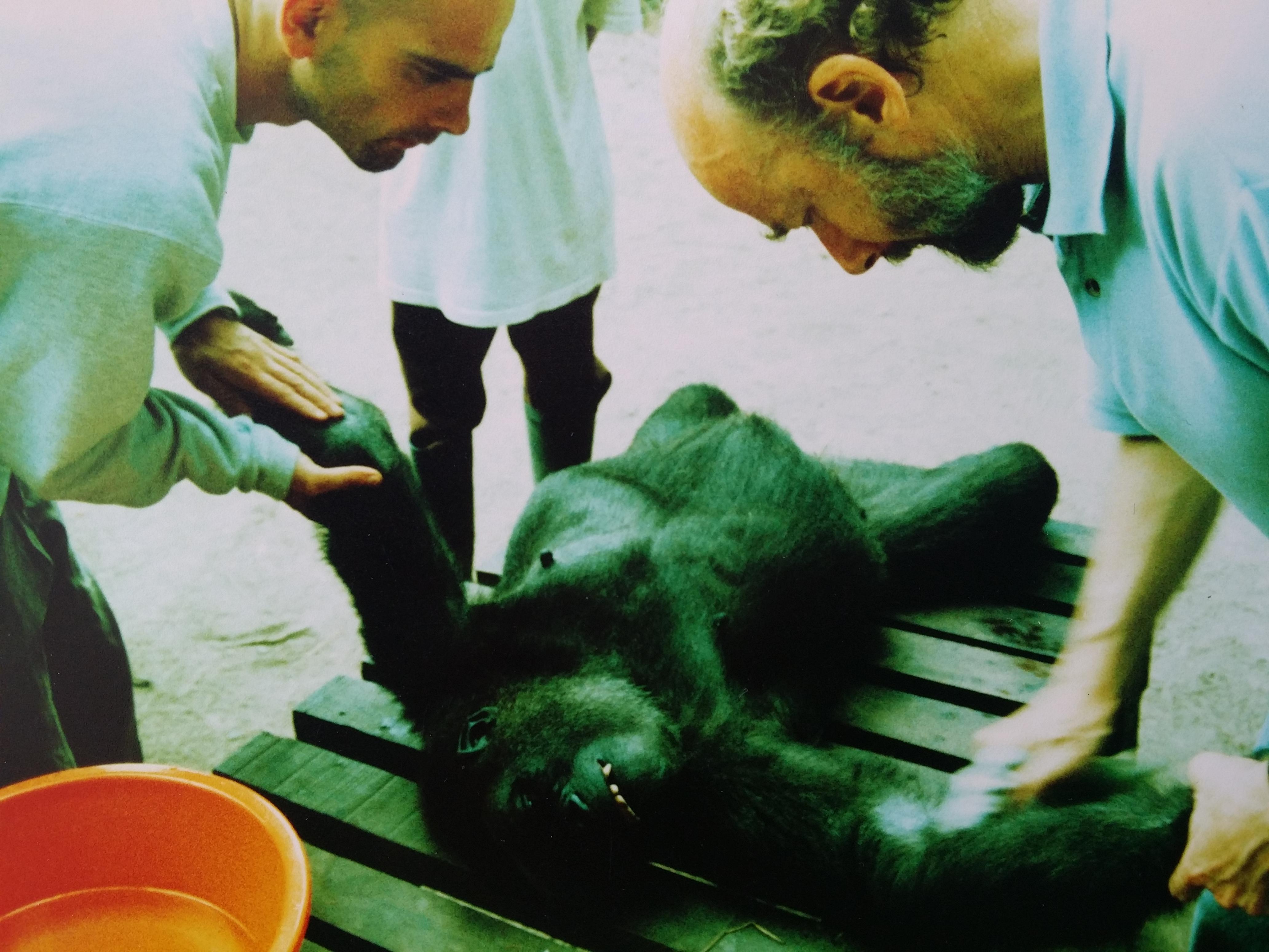 The Henley Vet Gorillas in the Congo