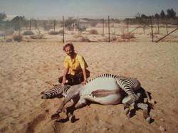 The Henley Vet - Zebra in Abu Dhabi