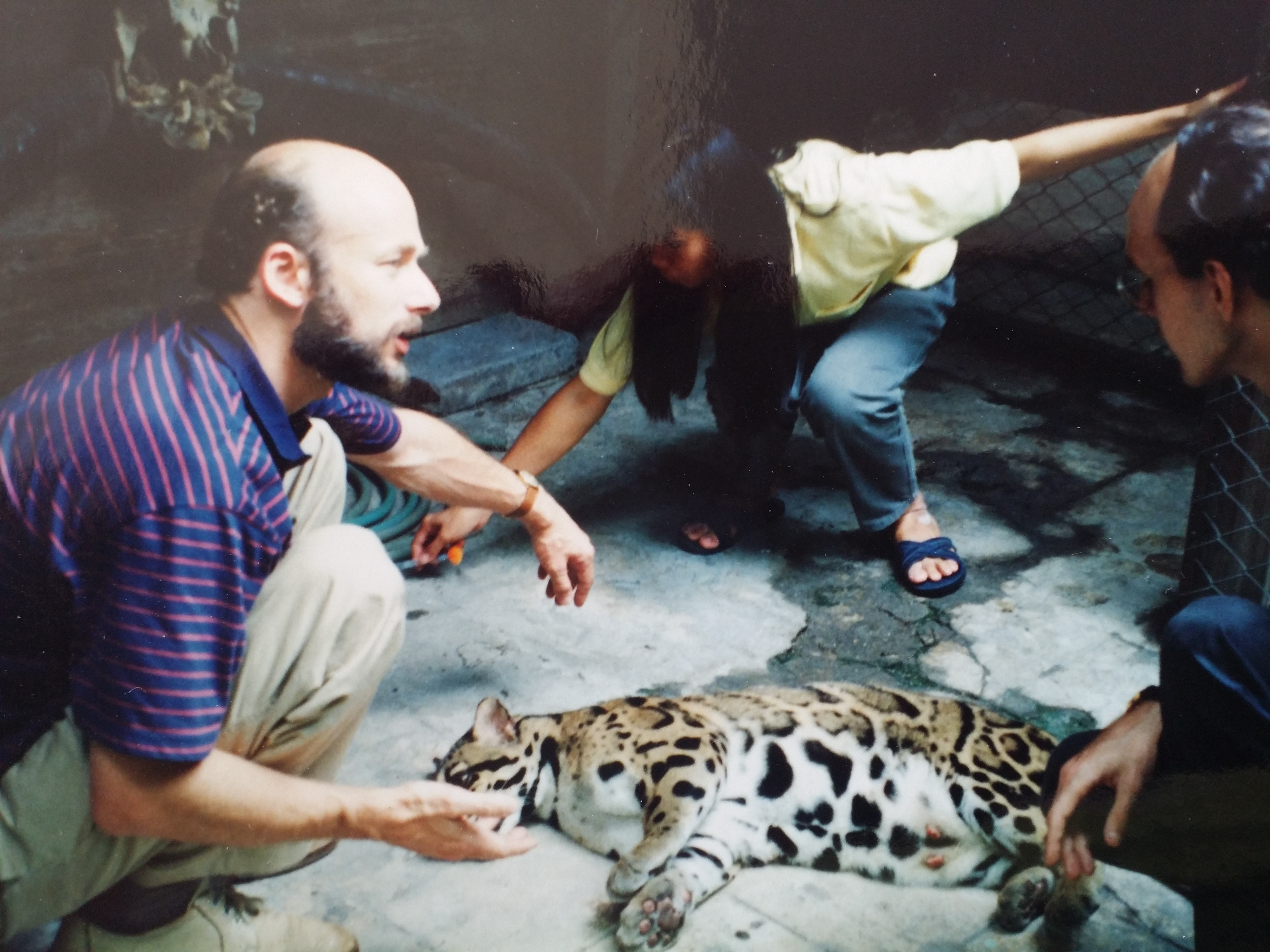 The Henley Vet Leopard in Thailand