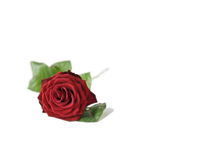 Lain Rose_.jpg