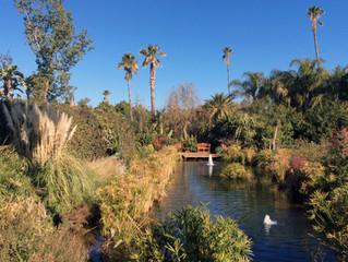 ANIMA - An Exciting New Garden