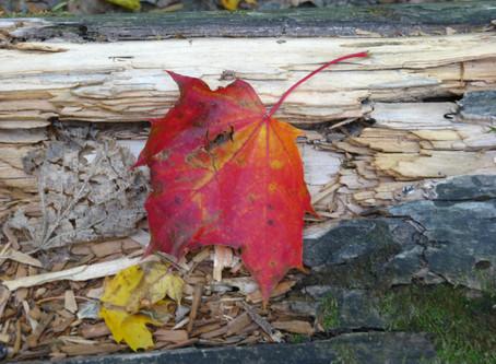 L'enchantement de l'automne: 108 Nuances en Jaune
