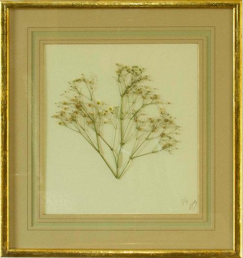 Cuadro Flores Naturales Secas XI 43X42