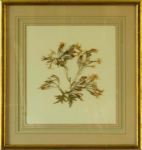 Cuadro Flores Naturales Secas XIIX 43x42