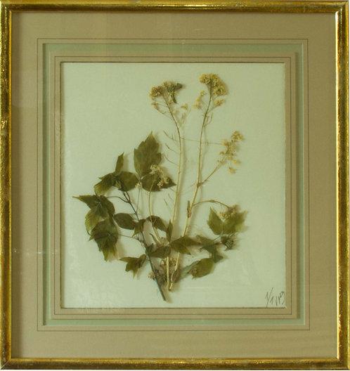 Cuadro Flores Naturales Secas XIII 43x42
