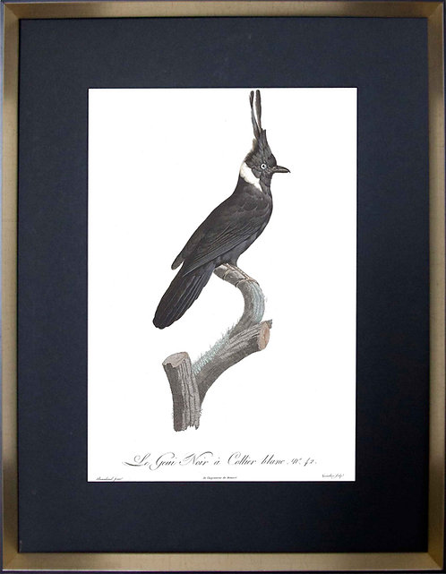 Cuadro Laminas Pájaros Franceses VI 56x71