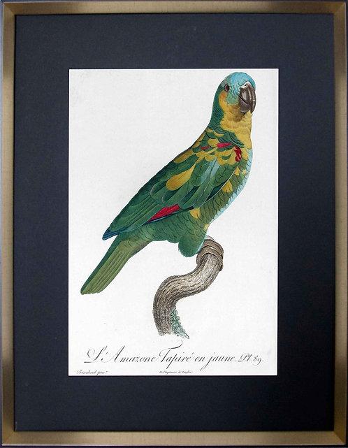 Cuadro Laminas Pájaros Franceses XI 56x71
