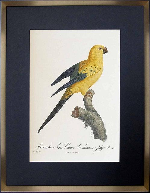 Cuadro Laminas Pájaros Franceses VII 56x71