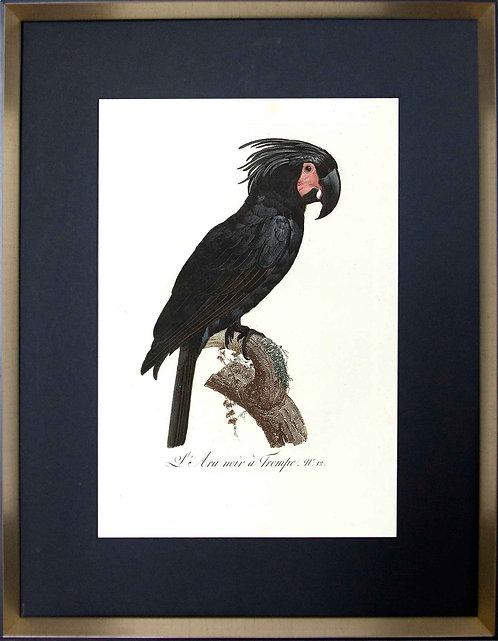 Cuadro Laminas Pájaros Franceses X 56x71