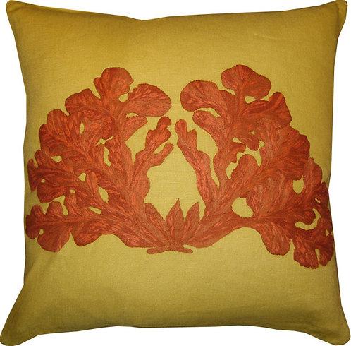 Coral Cerebro en colores #26