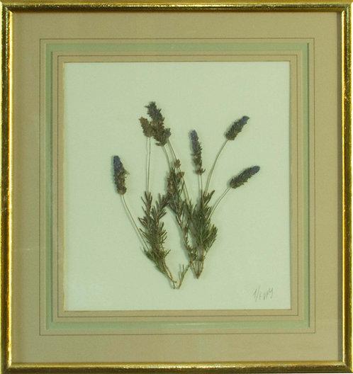 Cuadro Flores Naturales Secas XVI 43x42