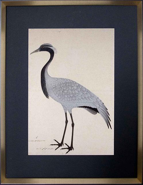 Cuadro Laminas Pájaros Franceses I 56x71