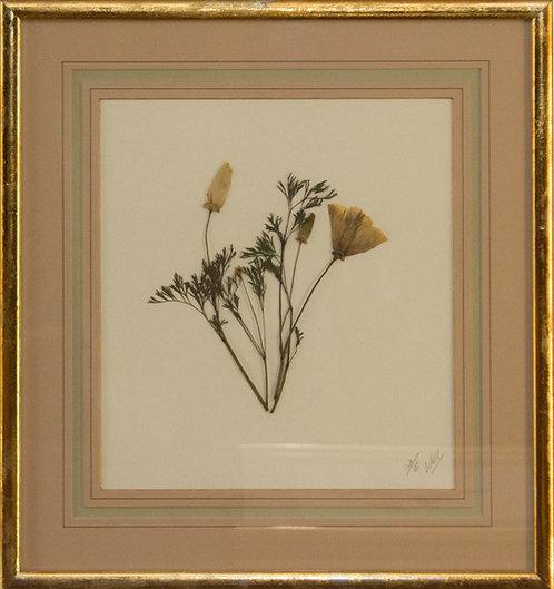 Cuadro Flores Naturales Secas XIX 43x42