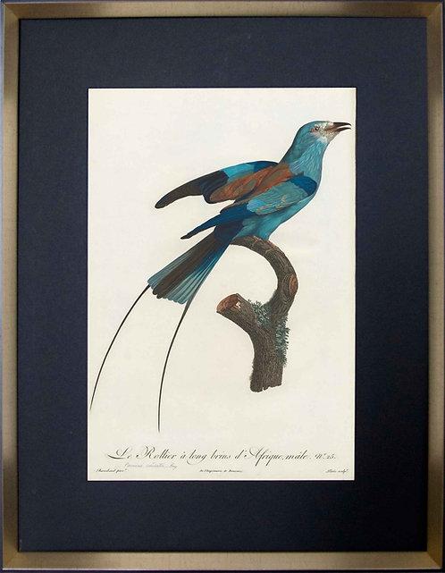 Cuadro Laminas Pájaros Franceses VIII 56x71