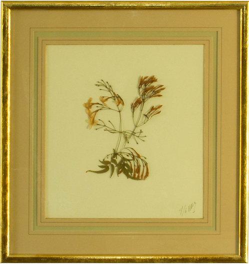 Cuadro Flores Naturales Secas XVII 43x42