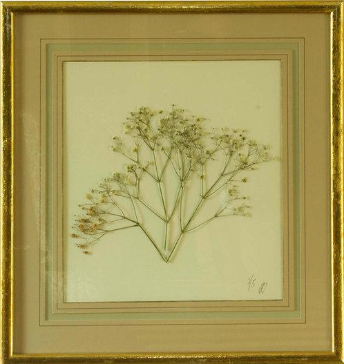 Cuadro Flores Naturales Secas XII 43x42