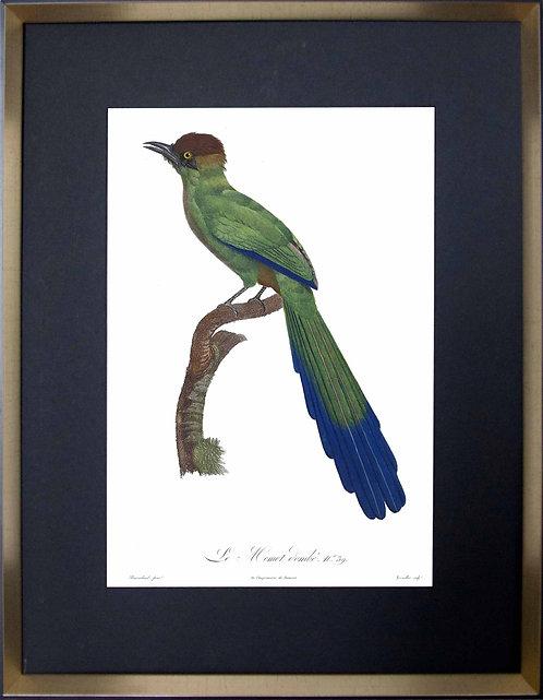 Cuadro Laminas Pájaros Franceses IX 56x71