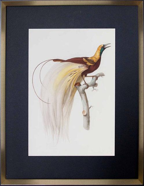 Cuadro Laminas Pájaros Franceses IV 56x71