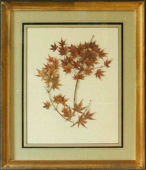 Cuadro Flores Naturales Secas Flor II 68x58