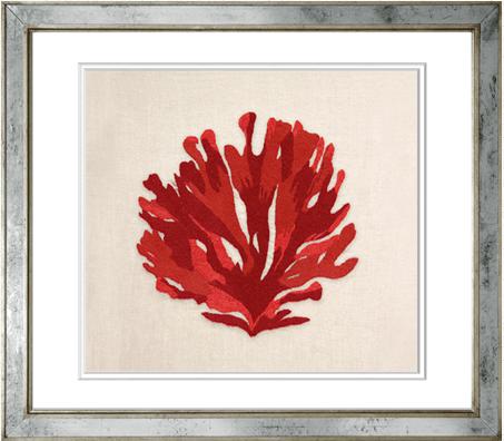 Coral Alga en Colores 18