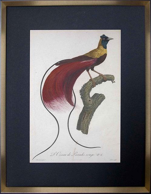 Cuadro Laminas Pájaros Franceses III 56x71