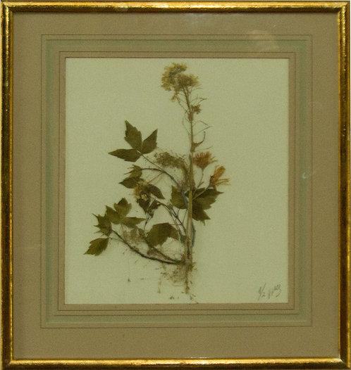 Cuadro Flores Naturales Secas X 43x42