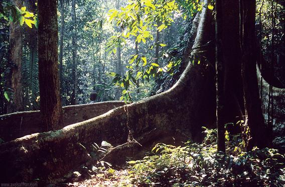 treeroot01