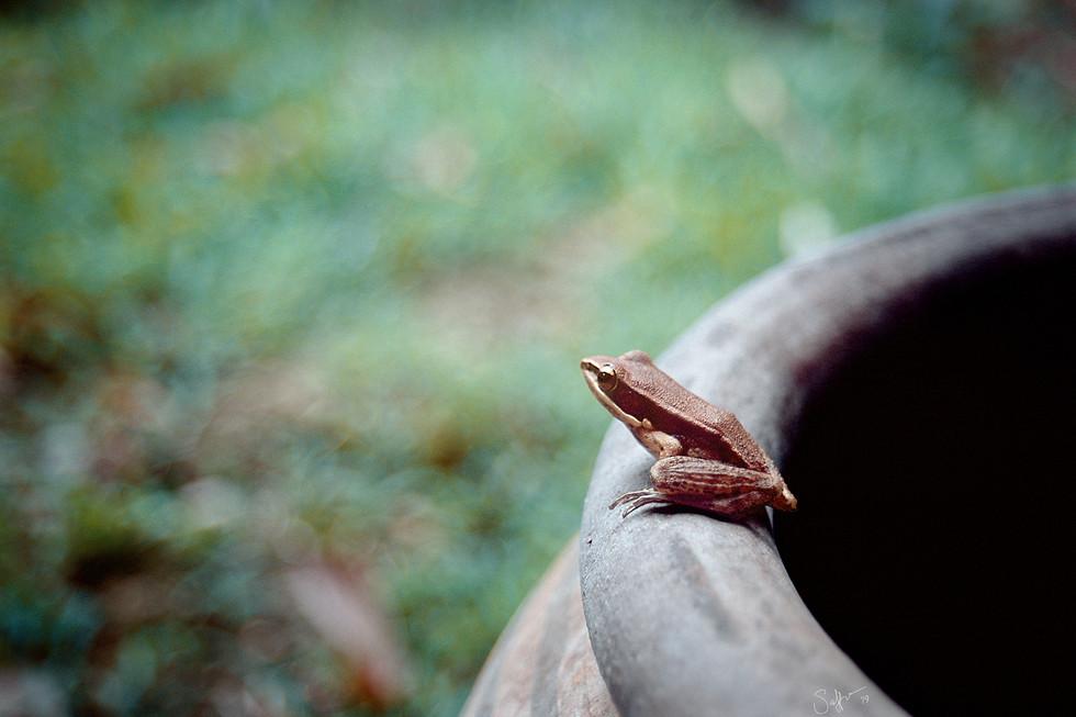 Sunyataramfrog