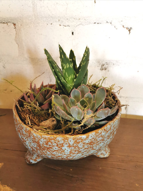 Quirky Succulent Planter - Blue