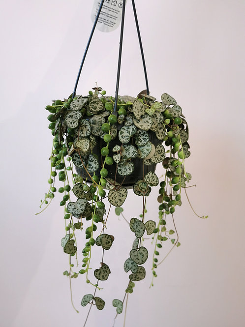 String of Hearts & String of Pearls Mix