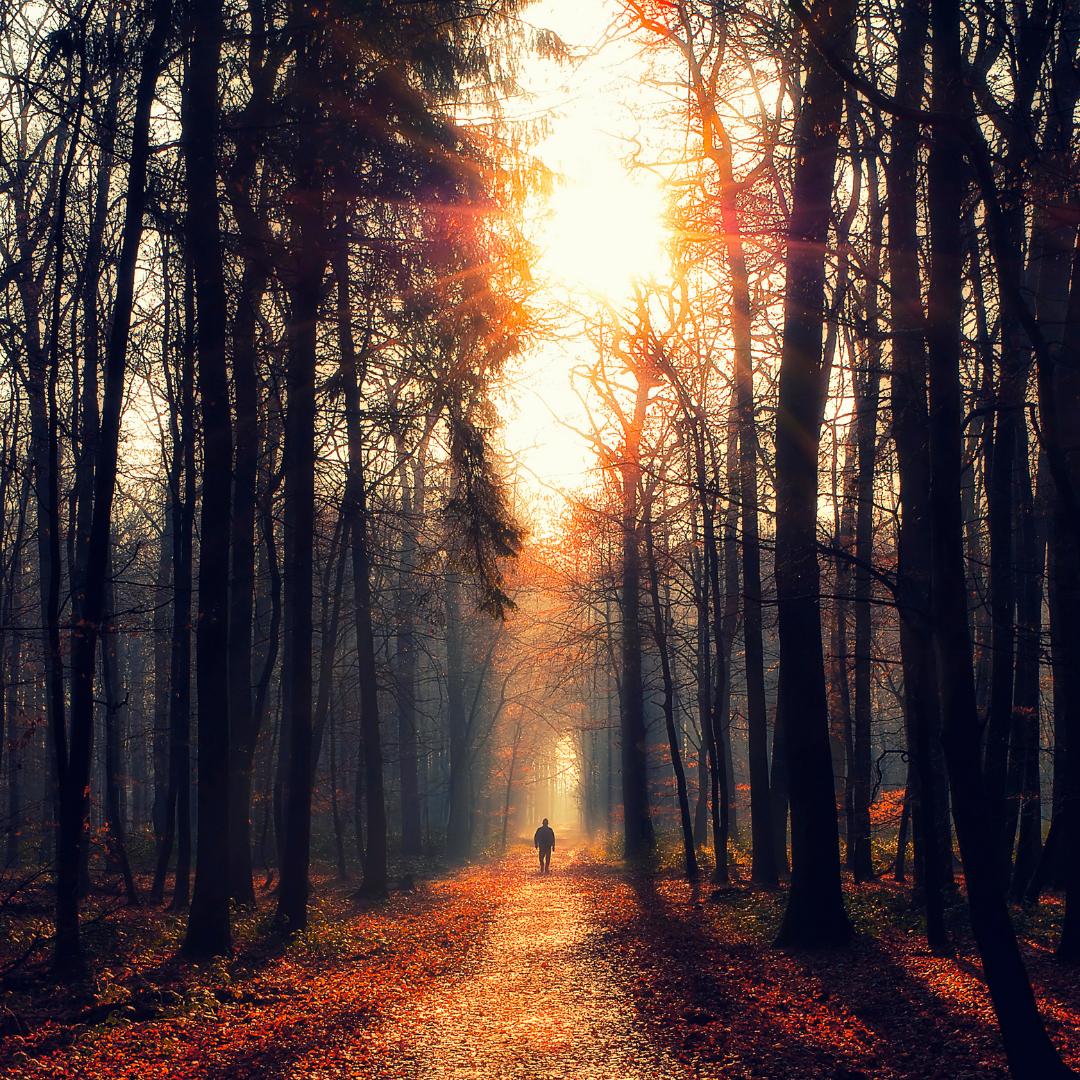 Keep the Path Clear