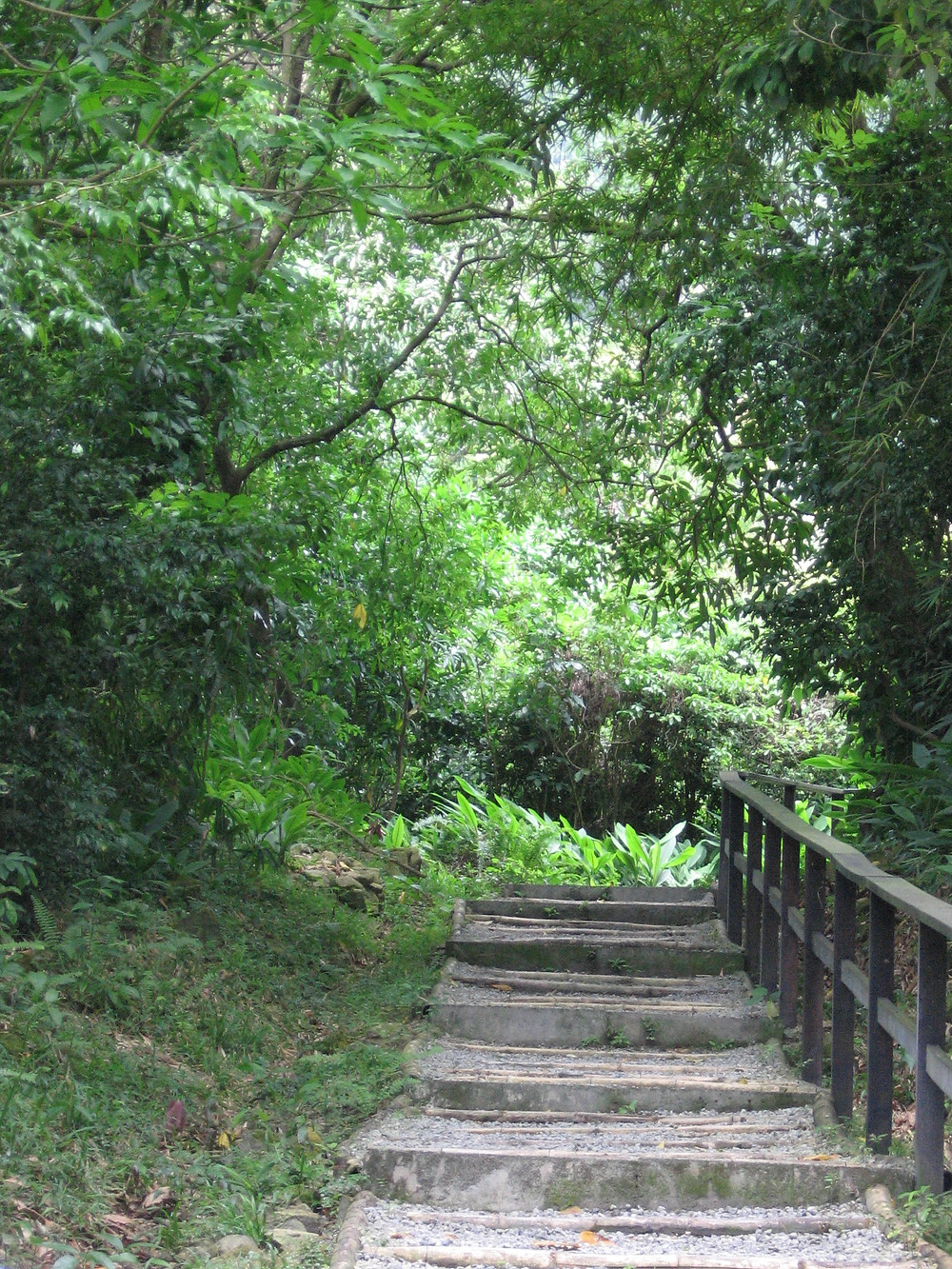 Finding your path. My path through botanical gardens in Soufriere, St. Lucia.