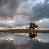 Cloudy-Oak.jpg