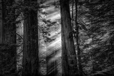gary wagner photography, gary wagner, ncapgallery, ncapgallery.com, Northern California Art Photography Gallery