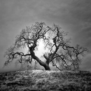 Oak II.jpg